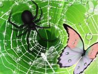 выбраться из паутины