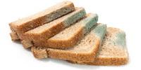 заплесневевший хлеб