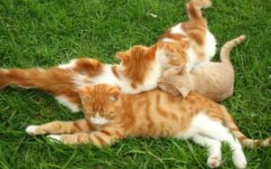 защитить кошек